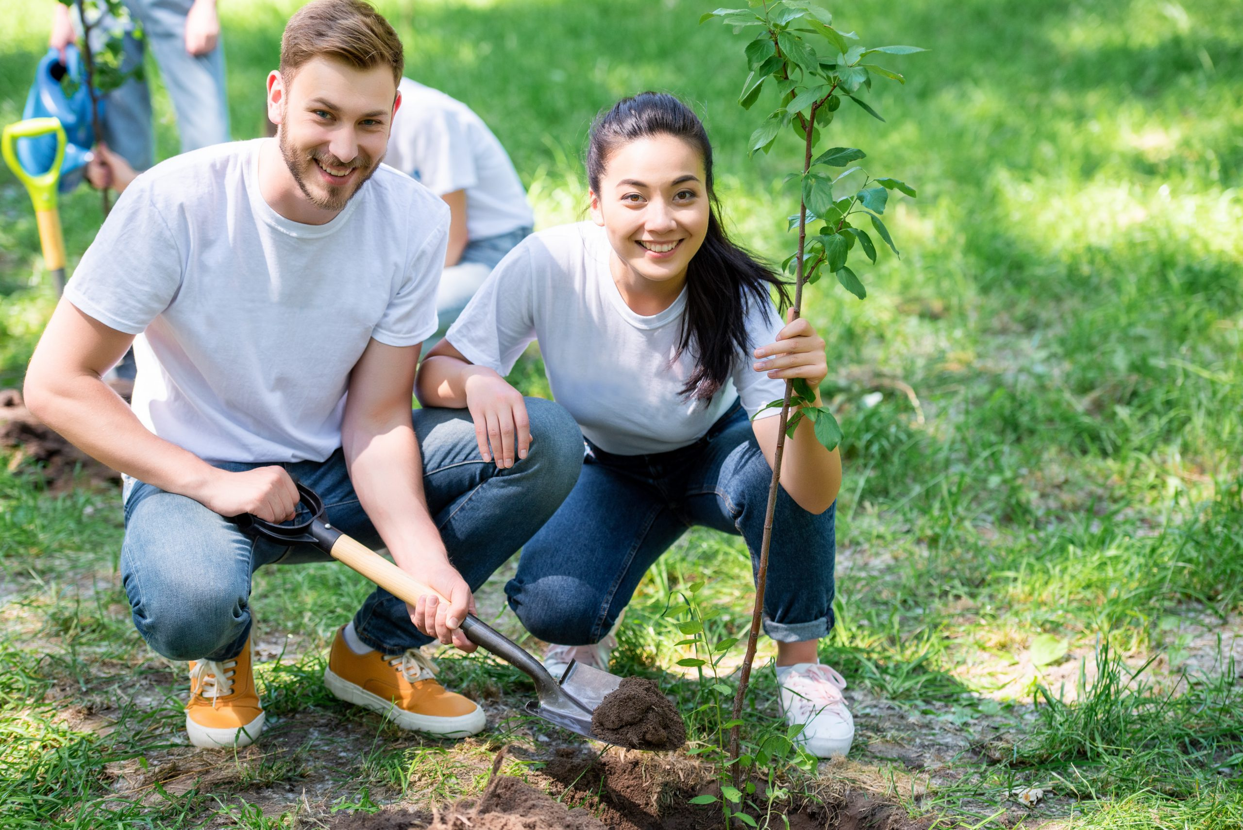 UV Insurance commits to tree planting